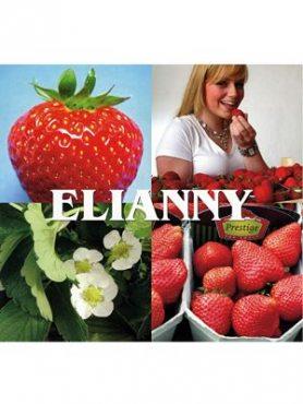 Земляника крупноплодная (клубника) Elianny (5 шт)