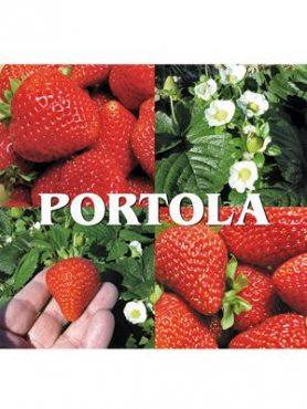 Земляника крупноплодная (клубника) Portola (5 шт)