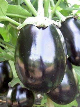 Баклажан Блек Бьюті (Чорний красень) (1 г)