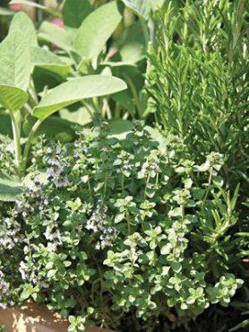 Набор пряных и лекарственных растений (5 шт)