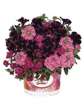 Набор  Confetti Garden Pink (1 шт)