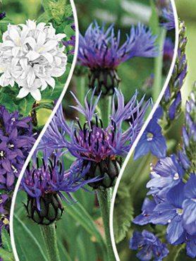 """Набір багаторічних квітів """"Ледачий садівник"""" (9шт)"""