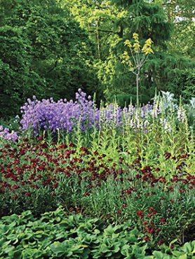 Смесь высокорослых многолетних садовых цветов (3 шт)
