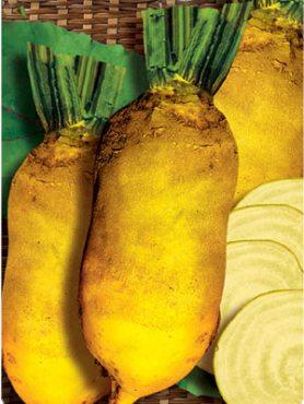 Буряк кормовий Эккендорфская жовта (50 г)