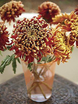 Хризантема срезочная Tom Pearce (3 шт) - 1