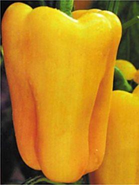 Перець солодкий Золотий Дзвін F1 (20 шт)