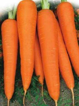Морковь Лосиноостровская 13 (10 г)