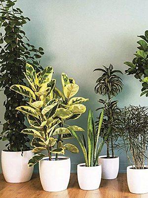 Смесь редких комнатных растений (3 шт) - 1