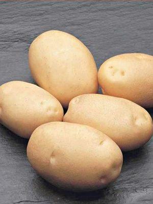 Картопля Гранада (5 кг) - 1
