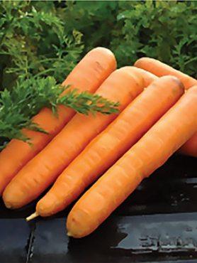 Морковь Лонг роте Штумпфе (2 г)
