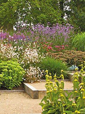 Mноголетние садовые цветы, смесь (3 шт)