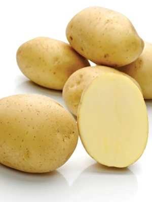 Картопля Міранда (1 кг) - 1