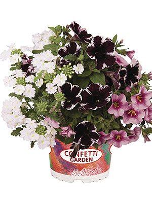 Набор Confetti Garden Marvelous Kiss (1 шт) - 1