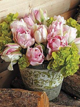 Тюльпаны Махровые поздние Angelique 1011 (100 шт)