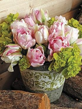 Тюльпаны Махровые поздние Angelique 1011 (20 шт)