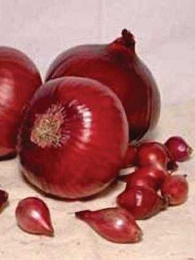 Лук-севок Ред Барон (25 кг)