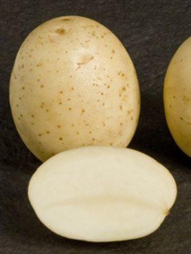 Картофель Саванна (1 кг)