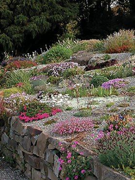 Низькорослі багаторічні садові квіти, суміш (5 шт)