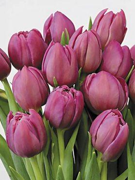 Тюльпаны Махровые ранние Margarita 12/+ (20 шт)
