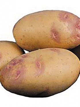Картопля Пікассо (5 кг)