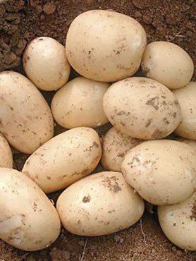 Картофель Орла (1 кг)
