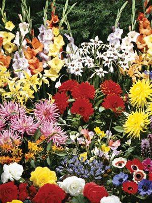 Набор весенних луковичных Летний сад (100 шт) - 1