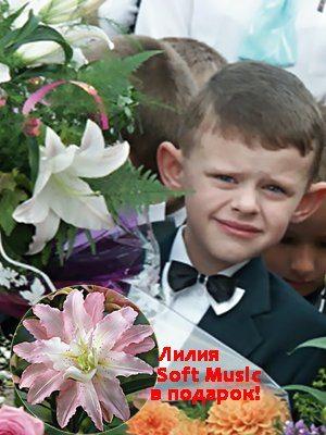 Набор лилий Сентябрьский букет (15 шт) - 1