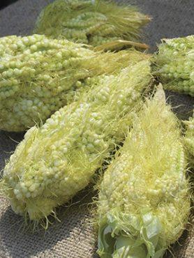Кукурудза салатна Діадема F1 (10 шт)