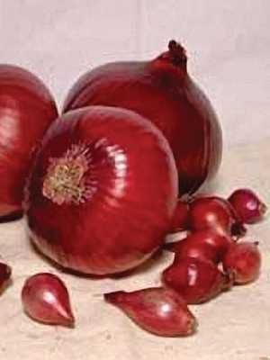 Лук-севок Ред Барон (3 кг) - 1
