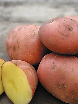 Картофель Моцарт (1 кг) - 1