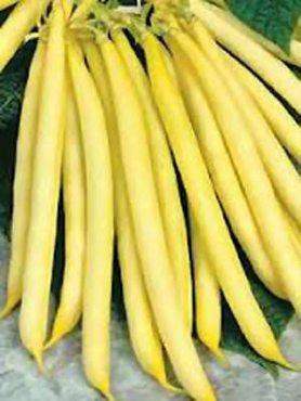 Фасоль спаржевая Претто (желтая с черными горошинами) (50 г)
