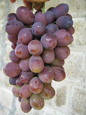 Виноград Каліста (1 шт)