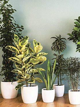 Смесь редких комнатных растений (3 шт)