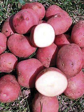 Картофель Кристина (1 кг)