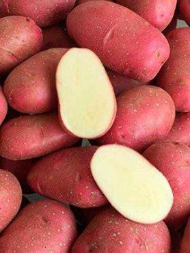 Картофель Торнадо (5 кг)