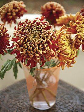 Хризантема срезочная Tom Pearce (9 шт)