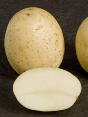 Картофель Саванна (1 кг) - 1
