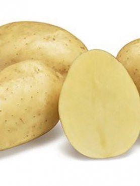 Картопля Парадізо (5 кг)