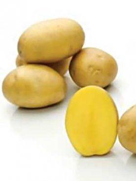 Картофель Бельмонда (1 кг)