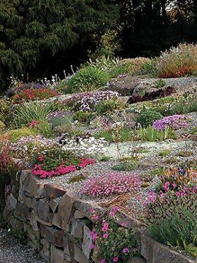 Низкорослые многолетние садовые цветы, смесь (5 шт)