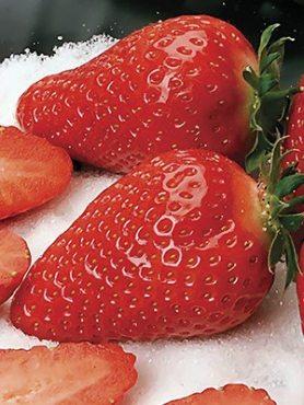 Суниця великоплідна (полуниця) Amy (25 шт)