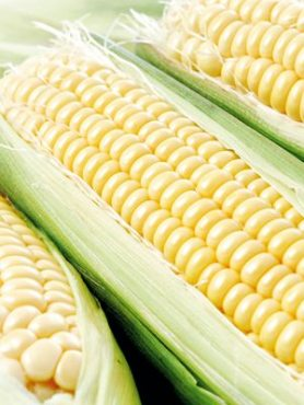 Кукурудза овочева цукрова Блонді F1, суперсолодка (15 шт)