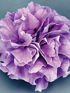 Петуния ампельная Surfinia Double Lilac (1 шт)