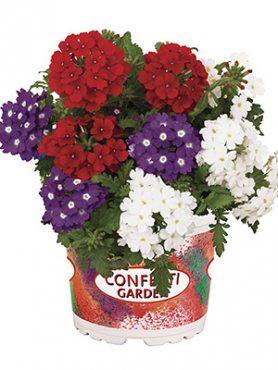 Набор  Confetti Garden Linda Liberty (1 шт)