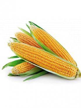 Кукурудза овочева цукрова Апполон F1, суперсолодка (20 шт)