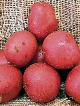 Картофель Инфинити (5 кг)