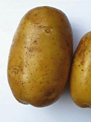 Картофель Минерва (1 кг) - 1