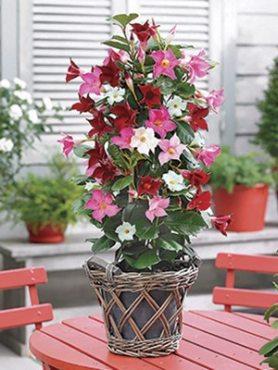 Дипладения Bloom Bells Тrio (3 шт) осень