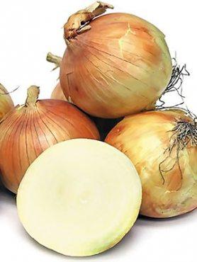 Цибулю севок Коррадо (0,5 кг)