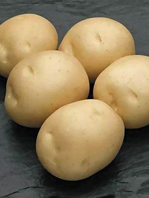 Картофель Сифра (1 кг) - 1